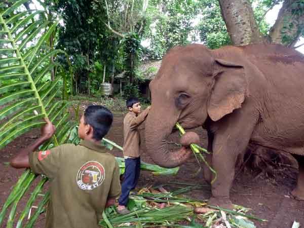 ganeshapark_elephant_volontariat